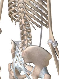 トップアスリートの背骨の構造2