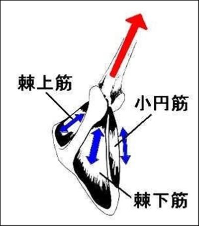 立甲がパフォーマンスアップ、障害予防に重要な理由12